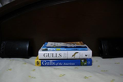 カモメの本
