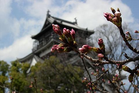 20080328桜