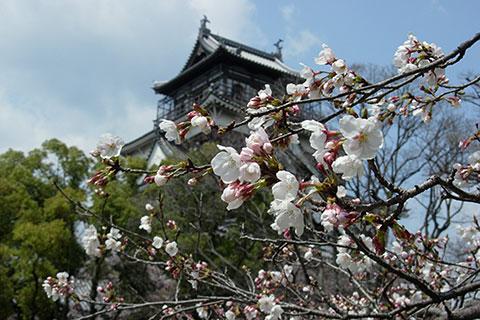 20080401広島城さくら