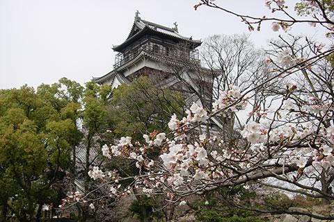 20080402桜