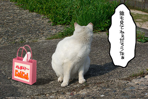 ネコ物語01