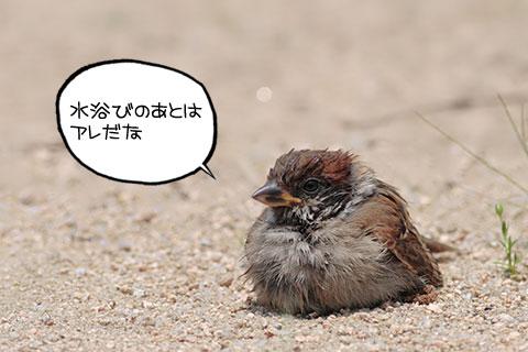 砂浴び01-02