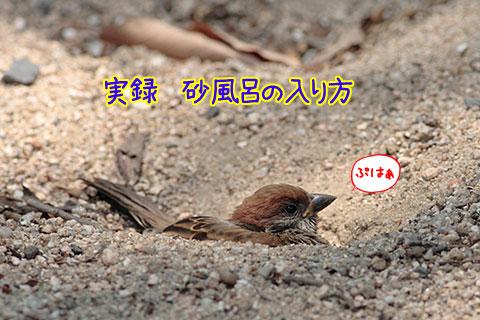 砂風呂02-01