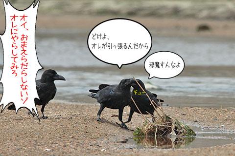 カラス三兄弟01