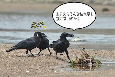 カラス三兄弟02