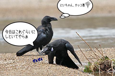 カラス三兄弟06