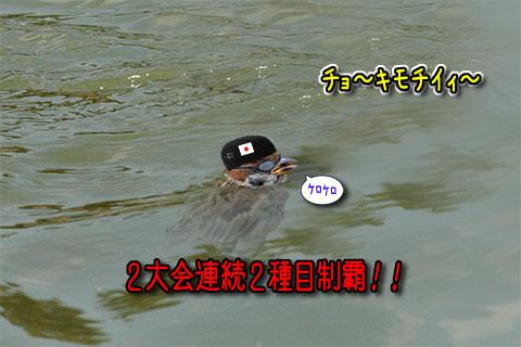 水泳スズメ
