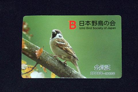 野鳥の会会員証