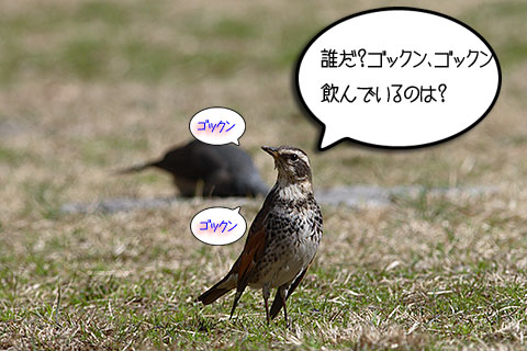 中山式03