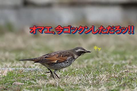 中山式04