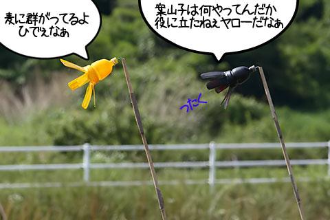 20090608suzume02-02.jpg
