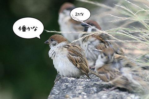 20090704suzume02.jpg
