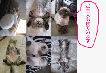 20090905cats.jpg