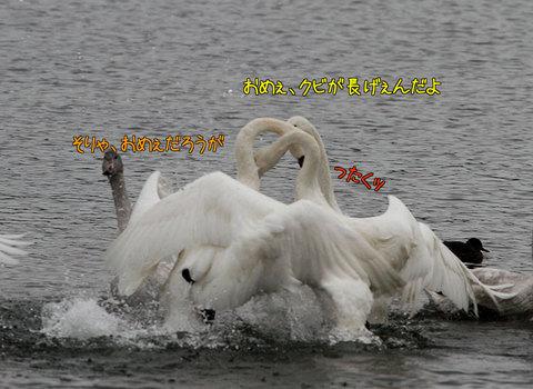 20091209mitsudomoe02.jpg