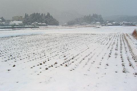 20100102yuki.jpg