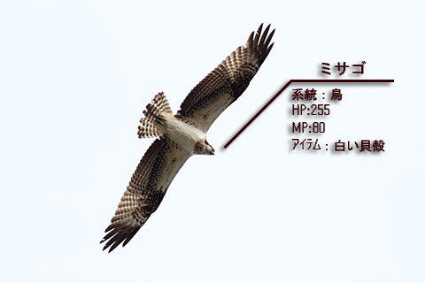 20100127misago.jpg