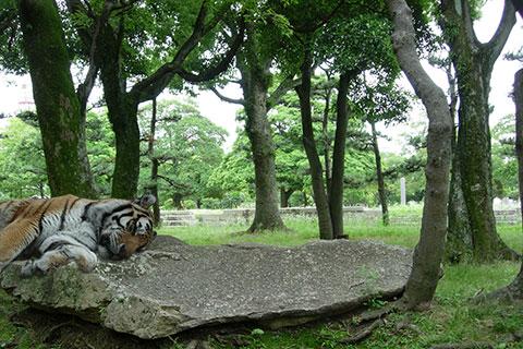 20080625tora.JPG